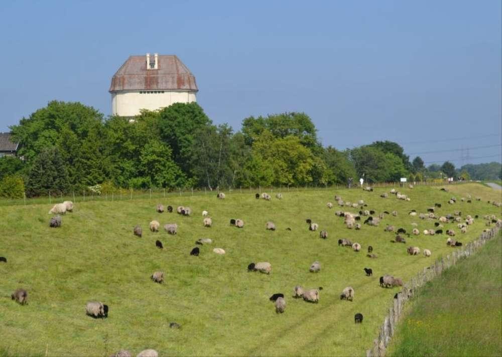 Rheindeich mit Wasserturm
